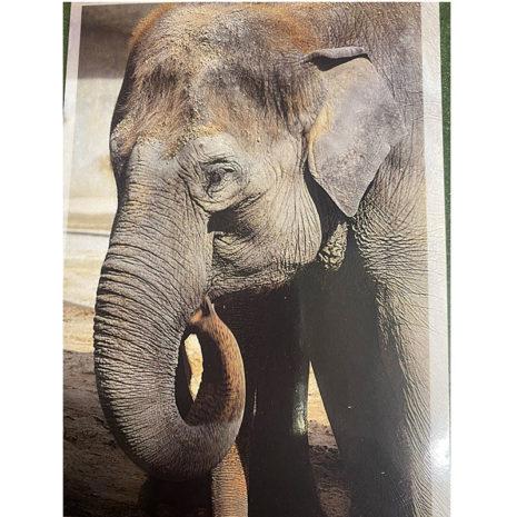 Postkarte mit Elefant