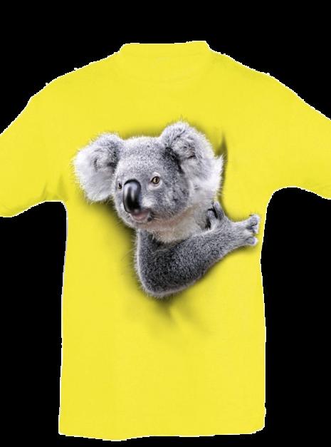 TK0014 - Koala