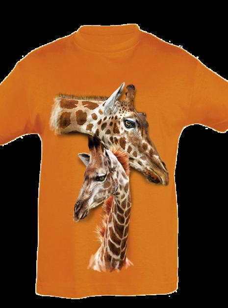 TK0030 - Giraffes